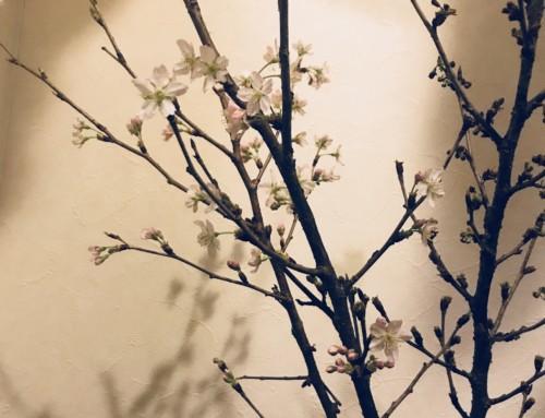 もうすぐ春、、、