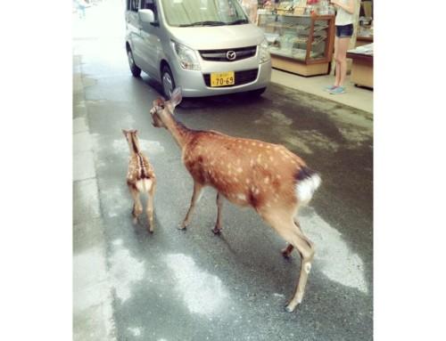 日本の世界遺産の宮島 厳島神社へ☆